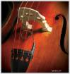 David Gage Strings - Realist Transducer for String Bass